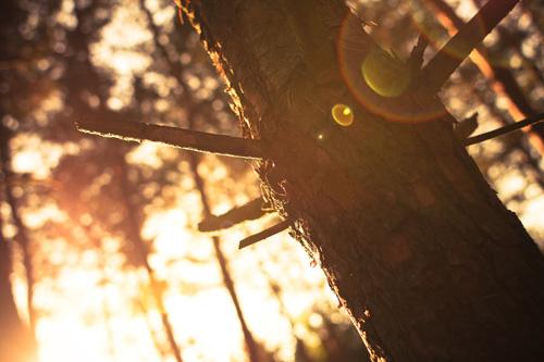 Get rid of dead wood